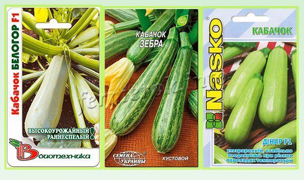 Рекомендуемые гибридные сорта кустовых кабачков