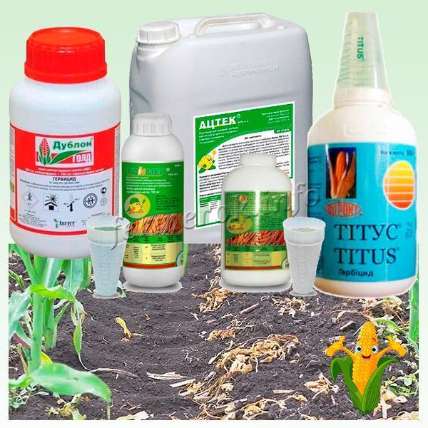 Самые популярные гербициды для кукурузы