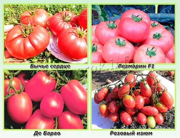 Самые урожайные розовые сорта помидор