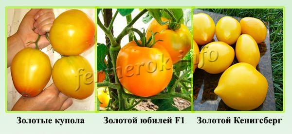 Самые урожайные сорта желтых томатов