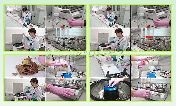 Самый эффективный метод выявления кольцевой гнили - лабораторные исследования