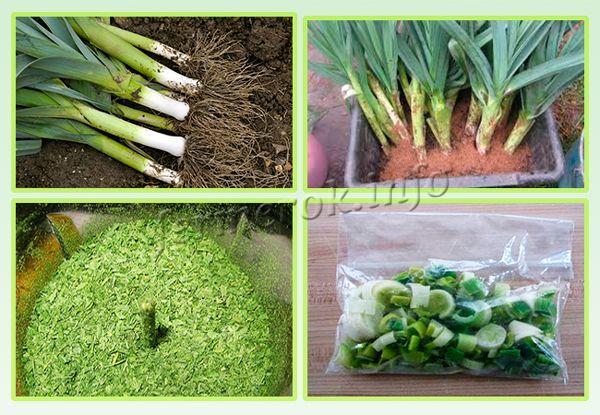 Сбор и хранение урожая лука-порея