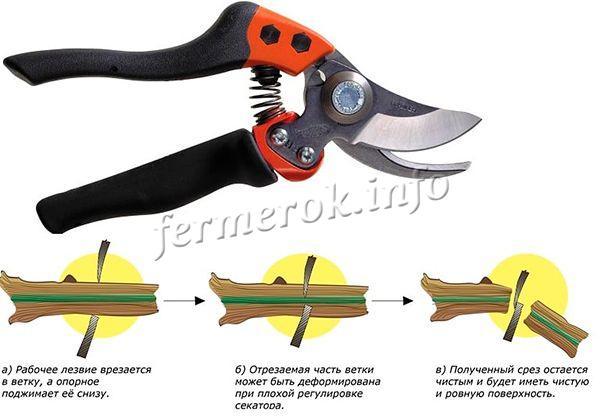 Секатор и нож должны быть хорошо заточены