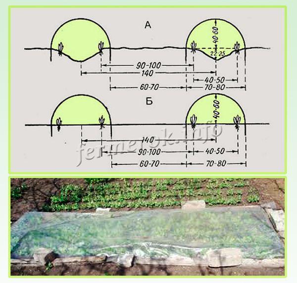 Схема посева редиски под пленкой