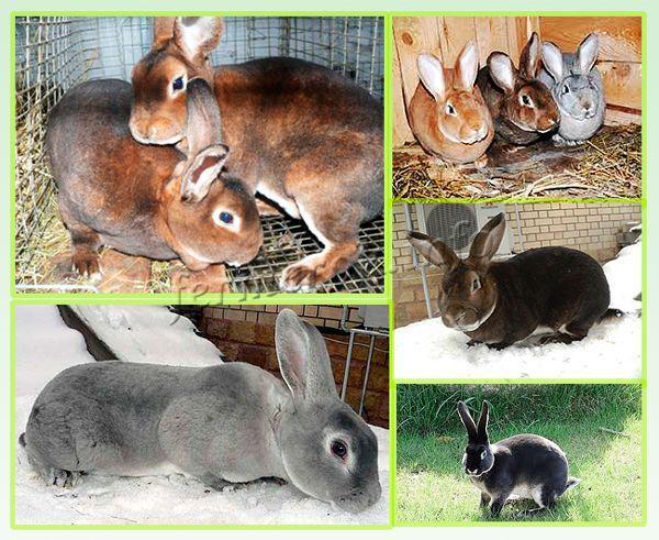 Содержать кроликов можно в вольерах или в клетках