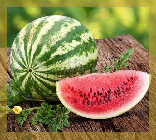 Арбуз АУ Продюсер: описание сорта, выращивание и уход