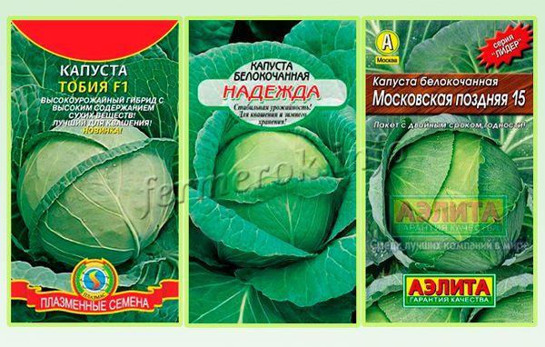 Сорта белокочанной капусты по сроку созревания