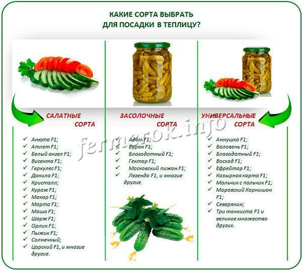 Сорта огурцов для салатов и обработки