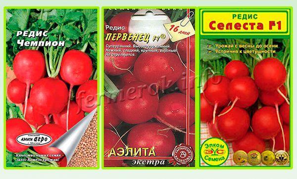 Сорта редиса для теплиц самые урожайные