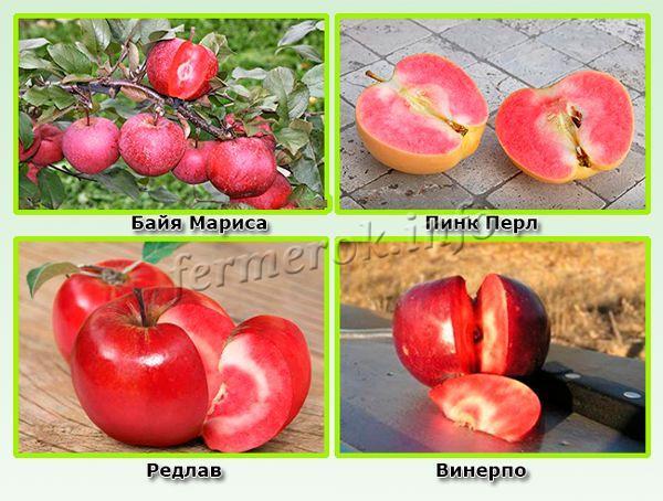 Сорта яблок с красной мякотью