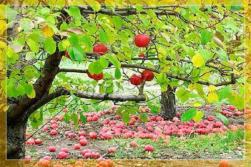 Садовый секатор: что это, виды, ТОП 5 лучших секаторов