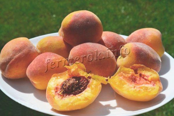 Спелые персики после перевозки покрываются темными пятнами и вмятинами