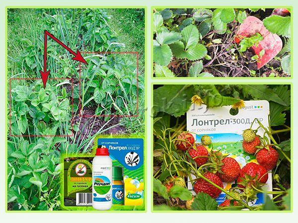 Способ 1. От сорняков можно избавлять и по старинке. Но есть и более эффективные способы