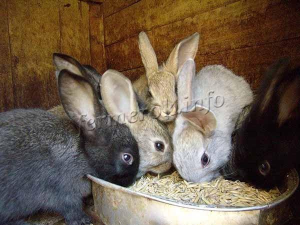 Способы содержания кроликов в домашних условиях