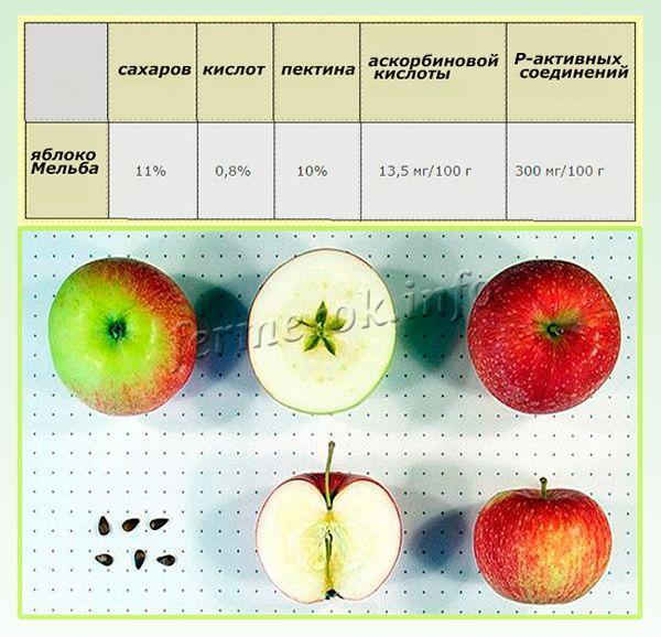 Средний вес плода 200-300 граммов
