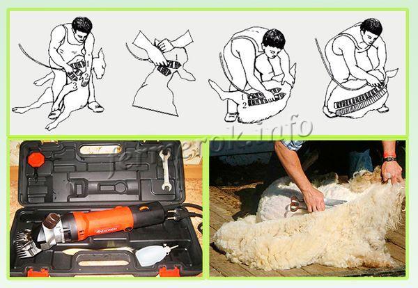 Стрижку проводят 1-2 раза в год. Выход шерсти после стрижки овцы – 4-5 кг, барана – 6-7 кг