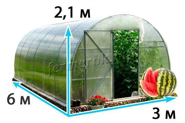 Только в обустроенной специально для выращивания арбузов теплице, можно собрать богатый урожай
