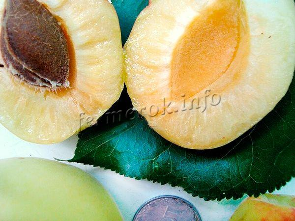 Употреблять абрикосы сорта Шалах рекомендуется в свежем виде
