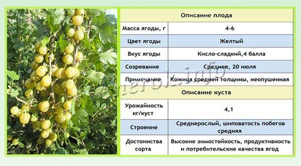 Урожайность – 5 кг плодов с одного куста