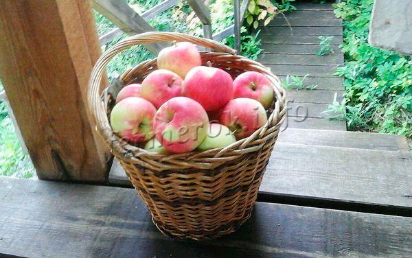 В свежем виде яблоки хранятся примерно 3-6 месяцев
