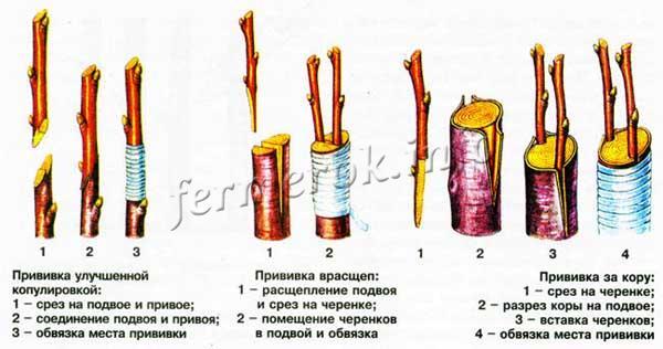 Виды прививки