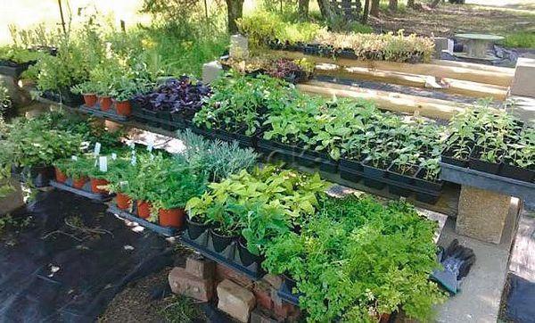 Выращивание зелени как бизнес может проводиться в любом удобном месте