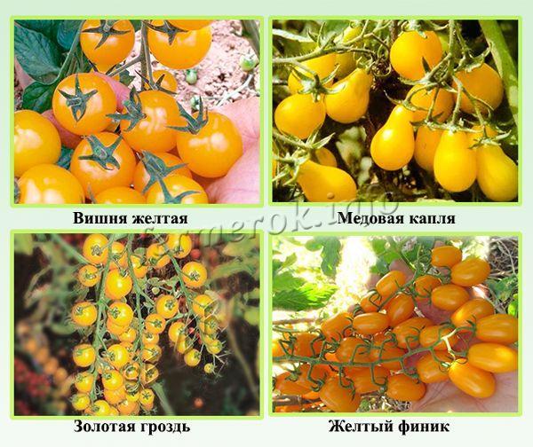 Желтые разновидности черри
