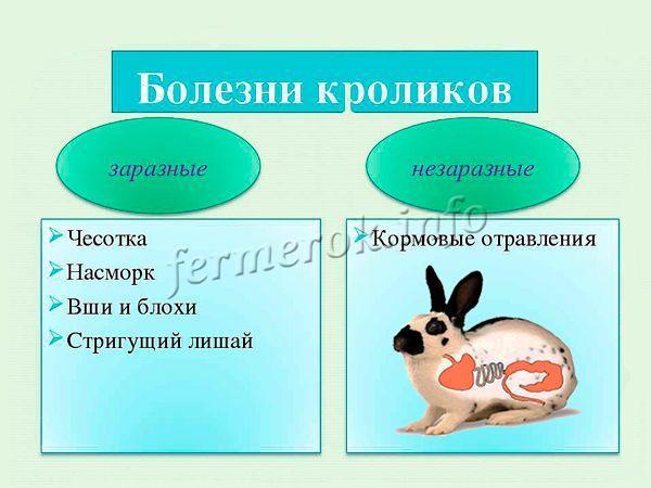 Заразные и незаразные болезни кроликов