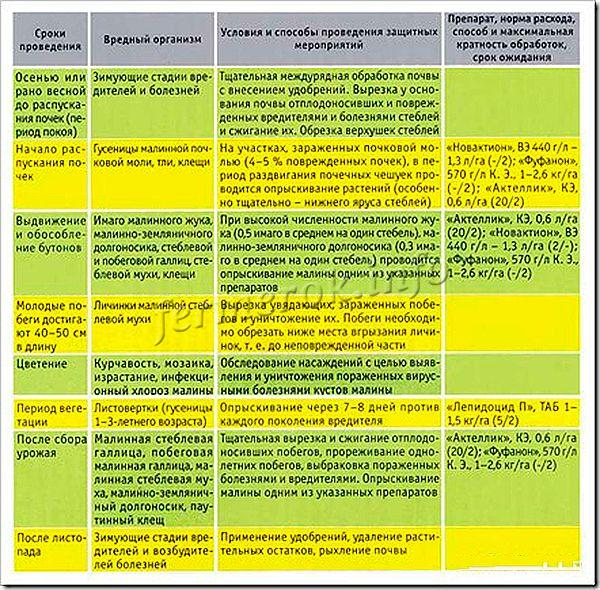 Защита малины от вредителей и болезней