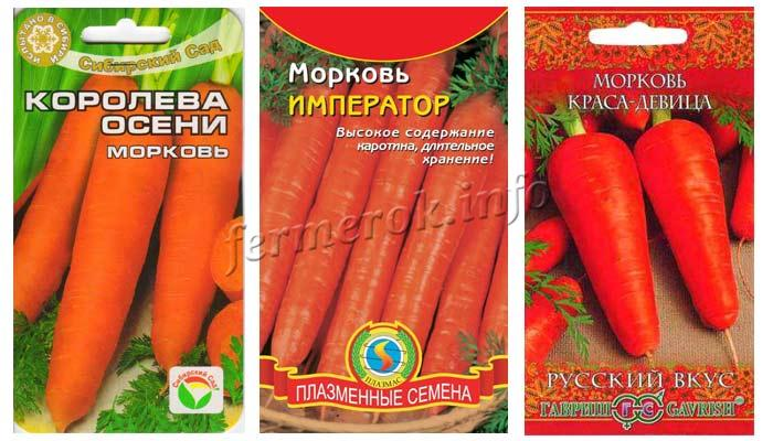 Фото семян моркови