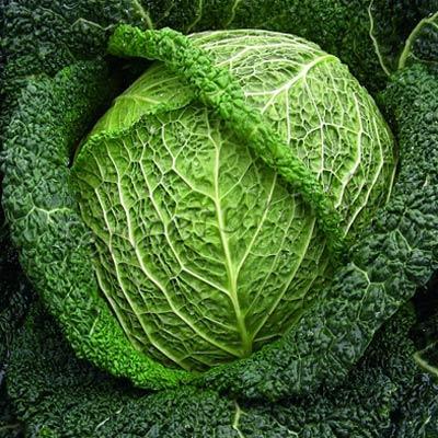 Фото савойской капусты