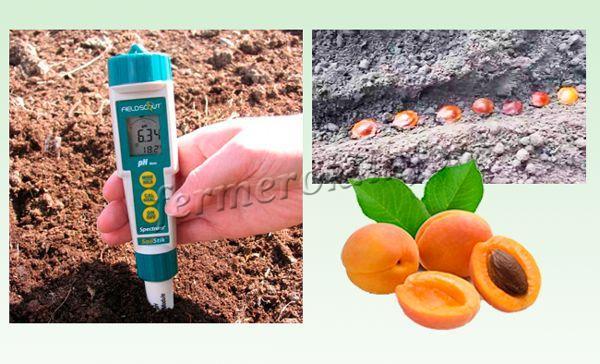 На какую глубину сажать абрикос косточкой 99