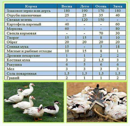 Чем кормить утку в домашних условиях летом 434