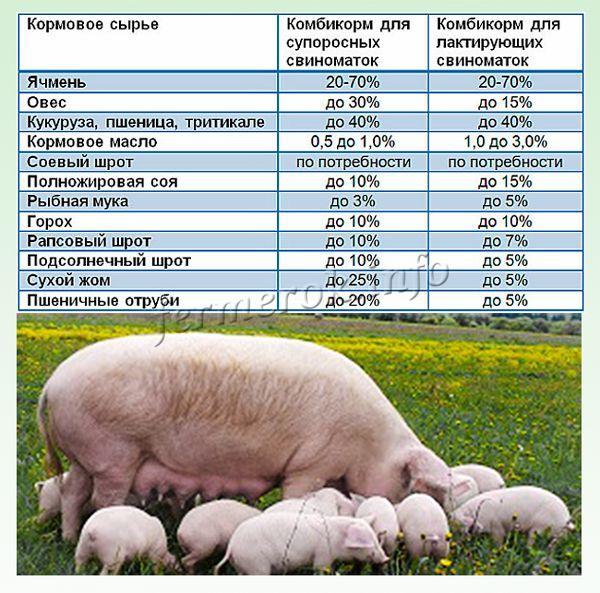 Комбикорм свиной своими руками 56